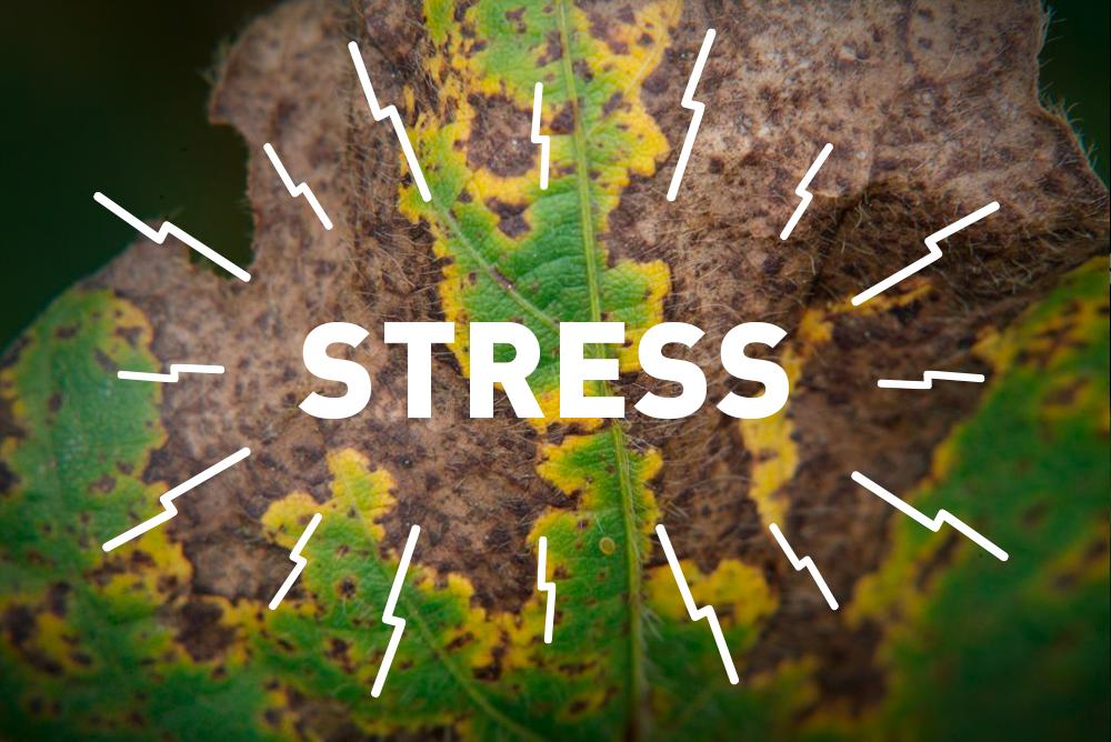 Ш.Цоож: Ургамал ч мөн стрессд өртдөг, стресстэй тэмцдэг