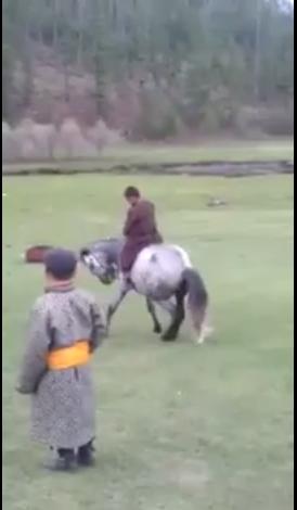 Монгол хүүгийн сургасан морь /БИЧЛЭГ/