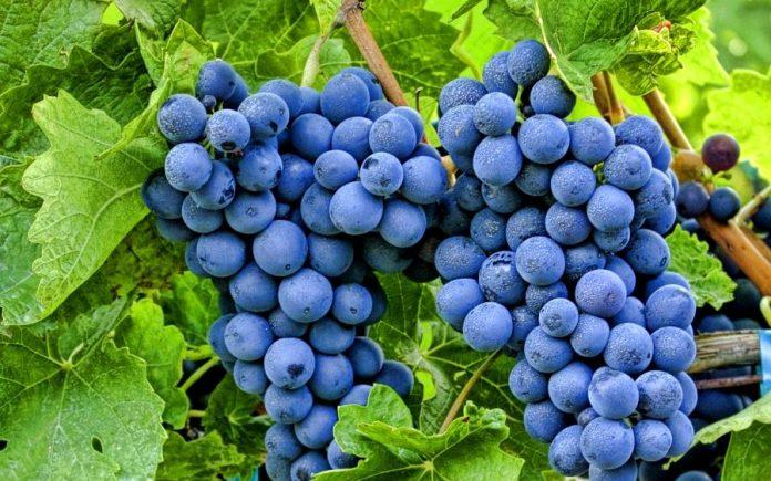 Азербайжан улс манайд дарс нийлүүлэхээр боллоо