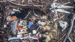 2050 он гэхэд  далайн шувуудын 99 хувь хуванцар иднэ