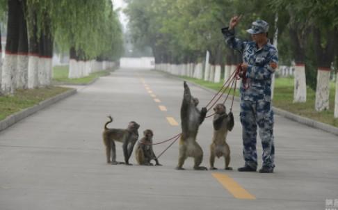 Сармагчны отряд Бээжингийн тэнгэрийг шувуудаас цэвэрлэж байна