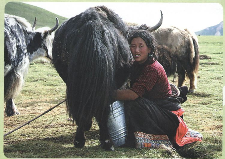 Балбын Монголчууд