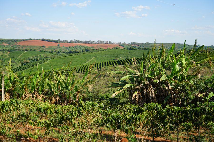 Бразилын кофены экспорт өсжээ
