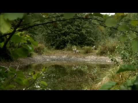Чернобыль дахь цацраг идэвхт чононууд баримтат кино