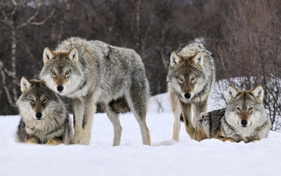 Чоно байхгүй бол...