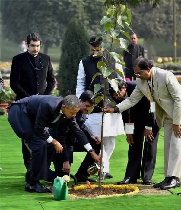 Обамагийн тарьсан бодь мод үхжээ