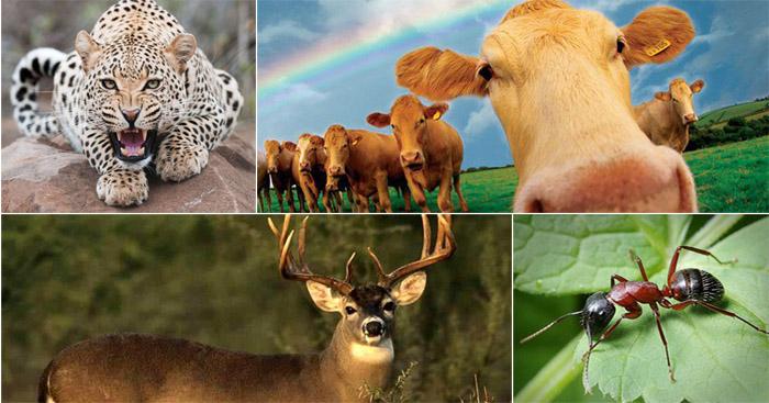 50 төрлийн амьтнаас бүтсэн машин