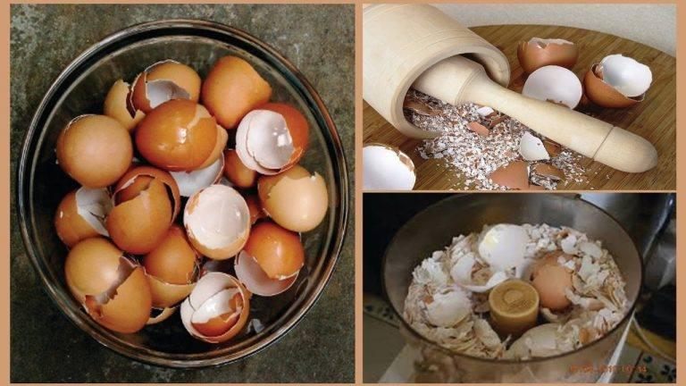 Өндөгний хальс нь диатез, рахит ЭДГЭЭХ ШИДТЭЙ