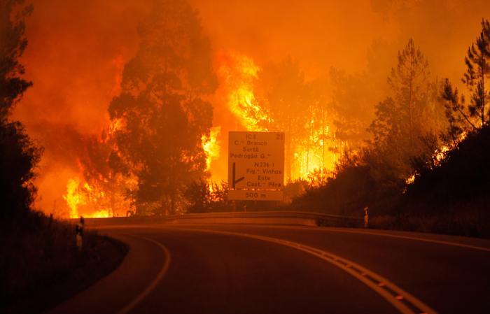 Португалид ойн түймрийн улмаас 61 хүн амь алдаад байна
