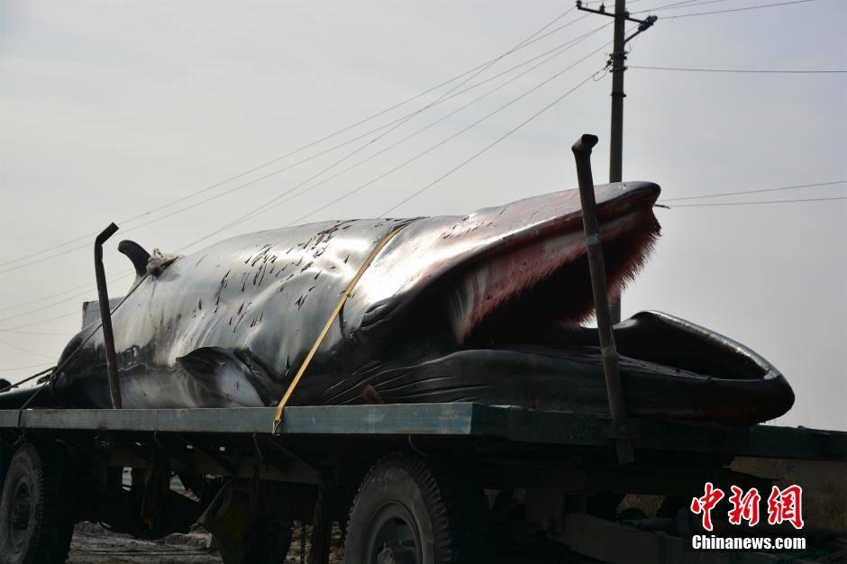 Далайн эргээс 3.7 тонн жинтэй халим олджээ