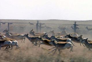 Цас ихтэй байгаагаас Оросын талаас ан гөрөөс олноор орж иржээ