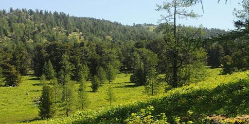 Нийслэлийн ойгоос 4400 шоо метр мод бэлтгэн, иргэдийн түлээний хэрэгцээг хангана