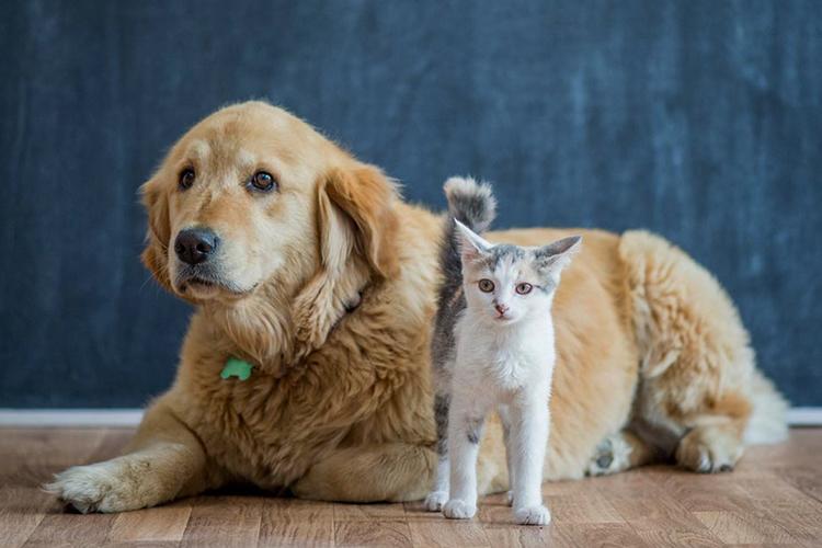 Нохой нэрээр нь дуудахад баярладаг бол муур болгоомжилж, үл итгэдэг