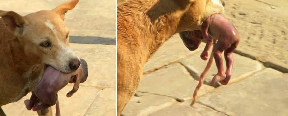 Төрмөгцөө хаягдсан нярайг золбин нохой аварчээ