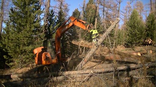 Нийслэлийн ойгоос энэ онд 5100 шоо м мод бэлтгэнэ