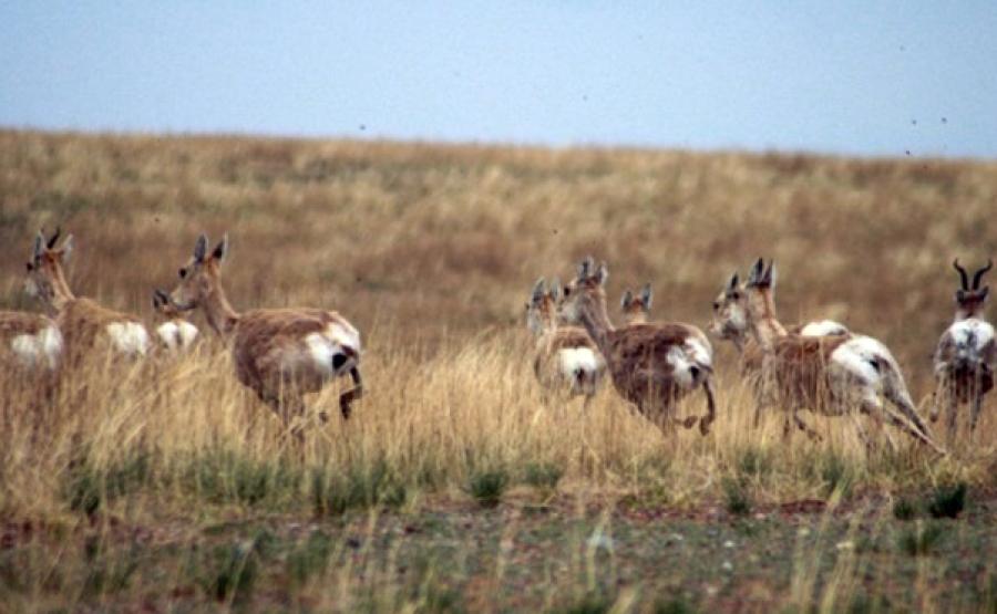 Дорнод аймгийн хэмжээнд ан амьтны тооллого, судалгааны ажил хийгдлээ