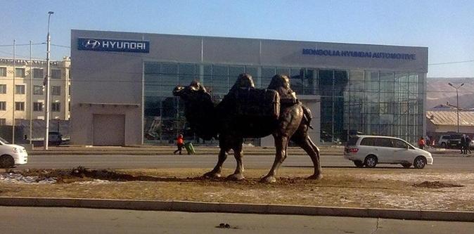 """""""Торгоны зам"""" дагуу 5 тэмээн барьмал барина"""
