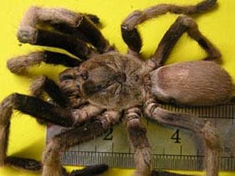 http://bolod.mn/Upload/news/spider%20www.bolod.mn.jpg