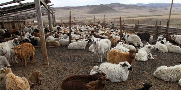 Нийслэлийн мал, тэжээвэр амьтдын тооллогын дүнг нэгтгэж байна